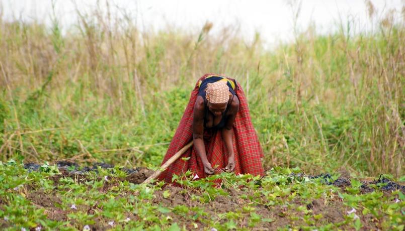 Donna al lavoro agricolo