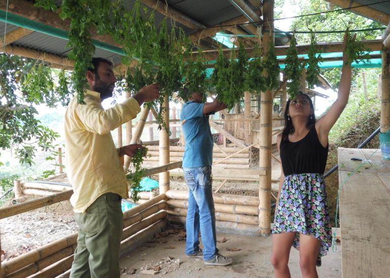 """Punto Missione – """"Formazione e sviluppo presso la comunità rurale di Norcasia, Colombia"""""""