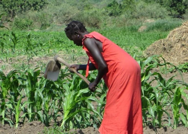 Vides – Sviluppo agricolo sostenibile in Sud Sudan