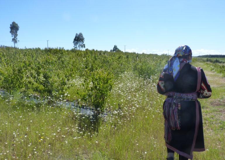 """COMI – """"Sostegno alle donne Mapuche nel recupero dei territori ancestrali"""""""