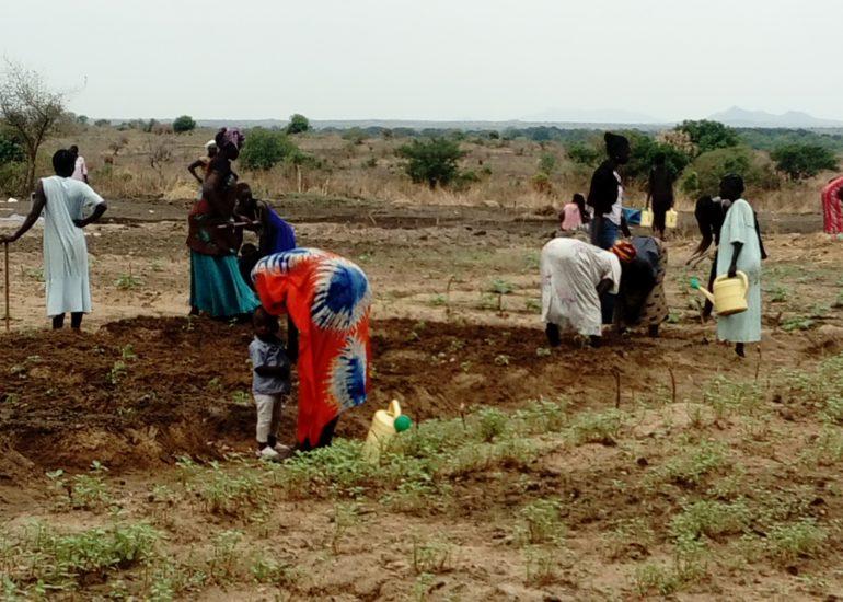 """VIDES –  """"Women empowerment e sviluppo agricolo sostenibile per il raggiungimento della sicurezza alimentare in Sud Sudan"""""""