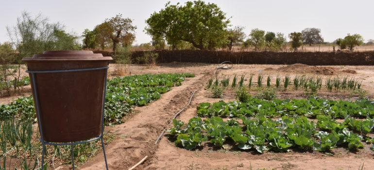 """COMI – """"SEMI: Sistemi di EconoMia agricola circolare"""""""