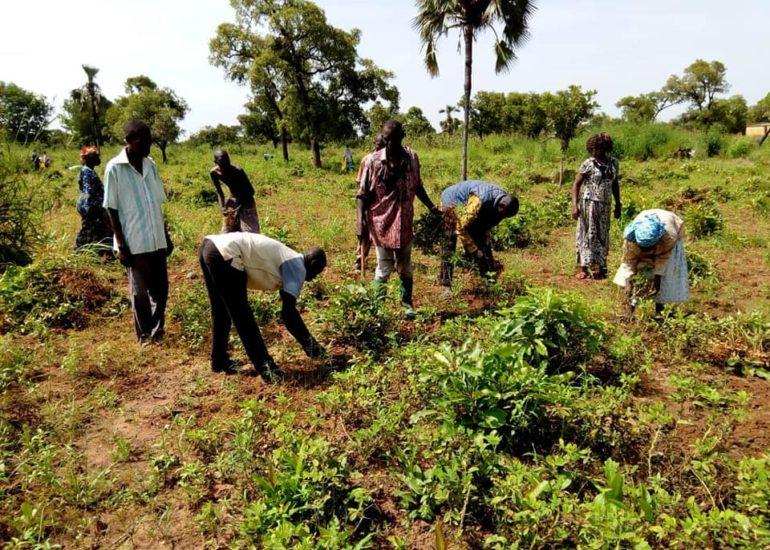 CVCS- Democrazia alimentare per le categorie vulnerabili in Burkina Faso