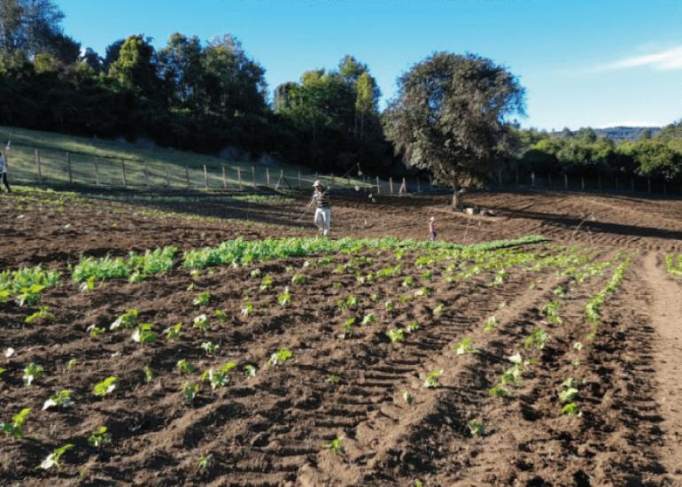 """COMI – """"Recupero della terra e della biodiversità per i Mapuche"""""""