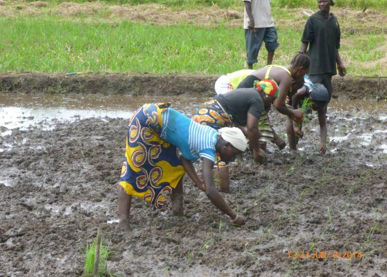 """ENGIM – """"Economia sostenibile nella produzione agricola"""""""