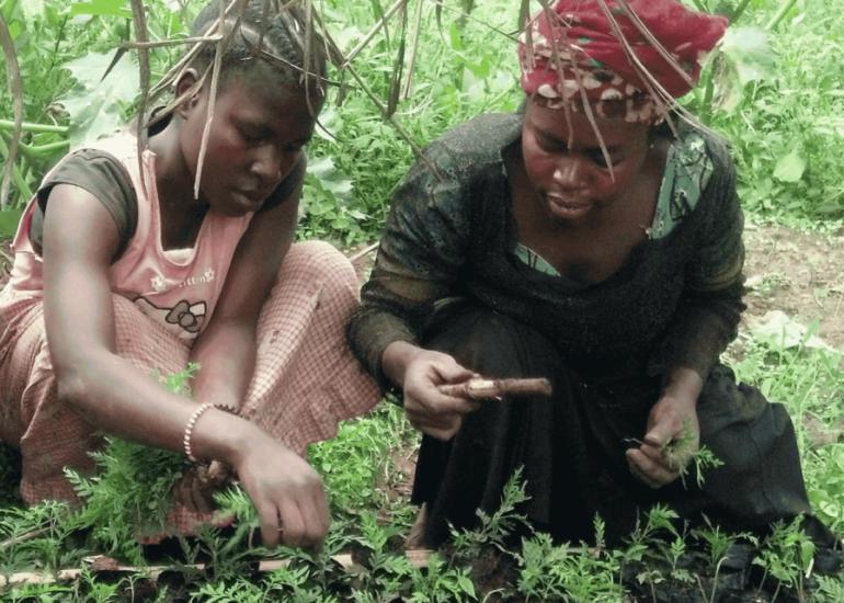 """Amici dei Popoli – """"PANDA MUMEA – Piantare un albero è agire per l'ambiente e per la pace"""""""