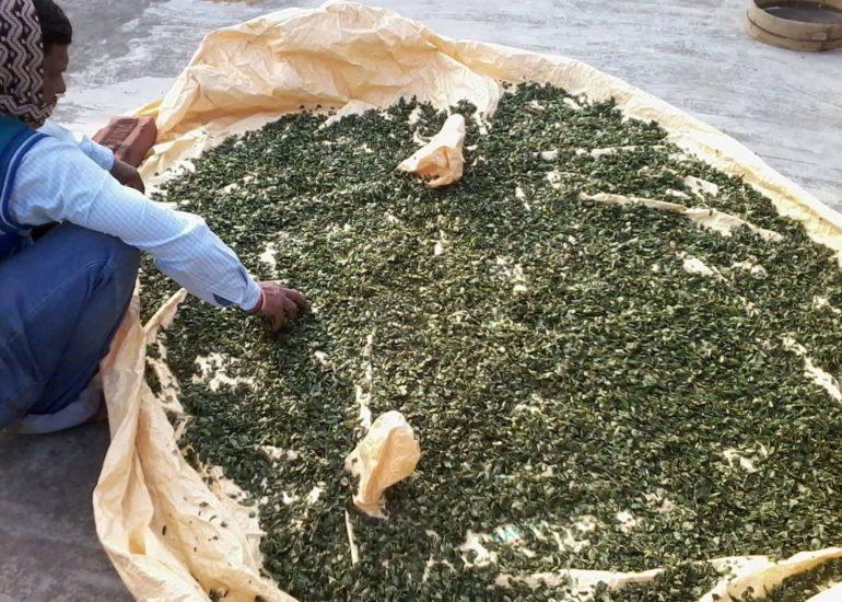 """VISPE – """"Supplemento nutrizionale con polvere delle foglie di moringa"""""""